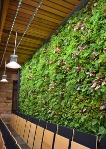 Marvin Hall Greenwall-2