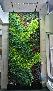 New York Wall Greenwall