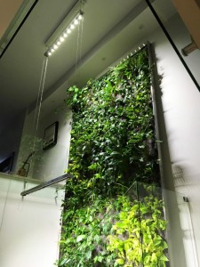 green wall 5