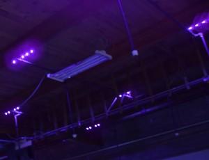 UV LED Black Lighting