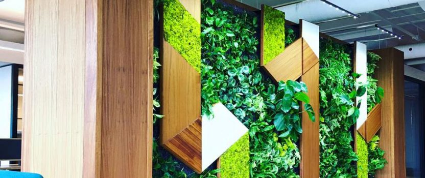 EnviroZone Design Completes Another Amazing Greenwall using Sunlite's Fixtures