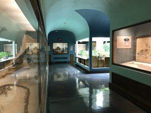 KU Natual History Mesuem Paleo Garden Exhibit with Sunlite ST30 -8