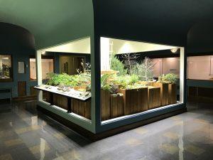 KU Natual History Mesuem Paleo Garden Exhibit with Sunlite ST30 -9
