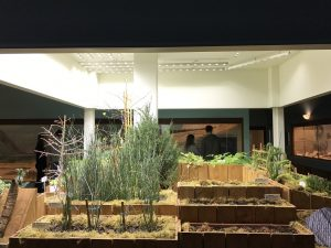 KU Natual History Mesuem Paleo Garden Exhibit with Sunlite ST30 -6