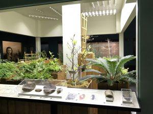 KU Natual History Mesuem Paleo Garden Exhibit with Sunlite ST30 -1