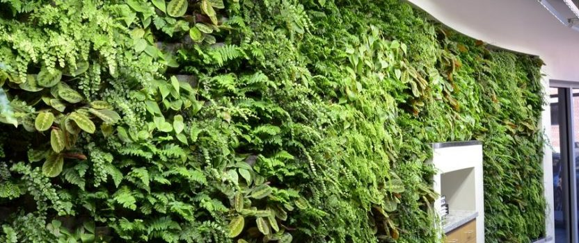 New Office Green Wall Installation by ArchNexus