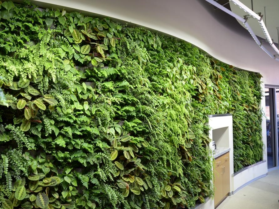 New Office Green Wall Installation By Archnexus Sunlite Science