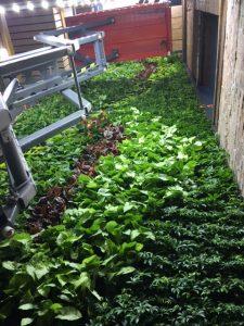 Untappd HQ Green Wall 2